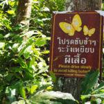 蝶の楽園、タイの「ケーンクラチャン国立公園」に行ってきた
