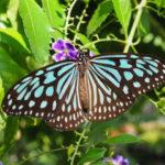リニューアルオープンした「伊丹市昆虫館」のチョウ温室が楽しい
