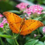 シンガポール・チャンギ国際空港「バタフライガーデン」の蝶の細かすぎる解説