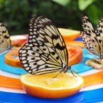2000匹の蝶!シンガポール・セントーサ島「Butterfly Park(バタフライパーク)」に行ってきた